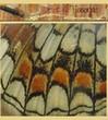 Art & Tissages : Créations Textiles, décoration, bijoux textiles, teinture végétale